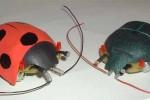 Micros & Robots n°2 : Coccinelle ou Scarabée